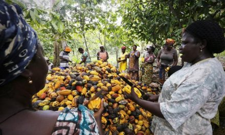 To sway global price increase, Ivory Coast halt export of Cocoa.