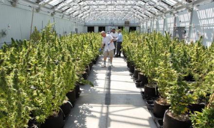 Brief Overview of the Marijuana Industry