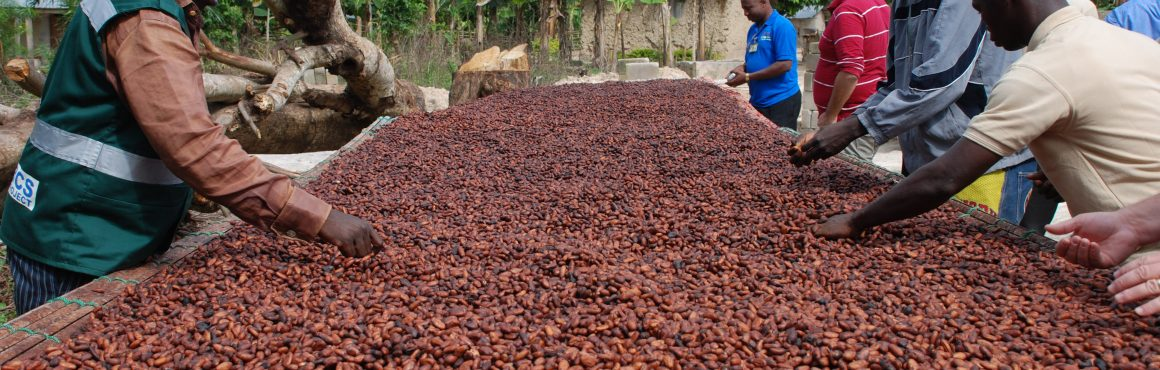 Ivory Coast to reduce cocoa output over next two years